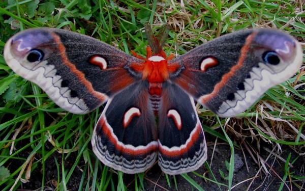 Бабочка превращается, бабочка превращается… в интерьер гостиной