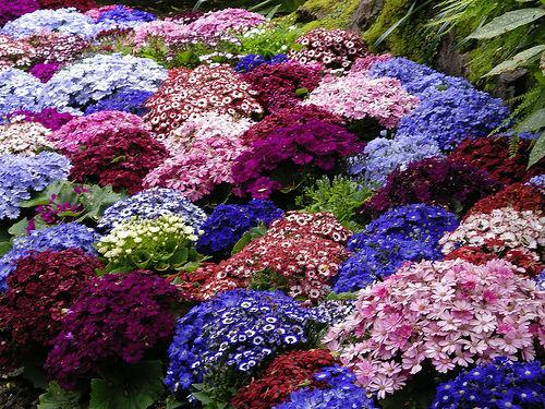 В кресло в своем цветущем саду и