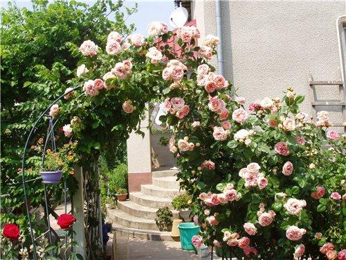 Фото дизайн сада с розами