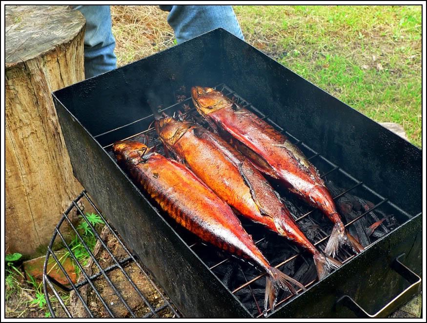 Как закоптить рыбу в домашних условиях на коптильне