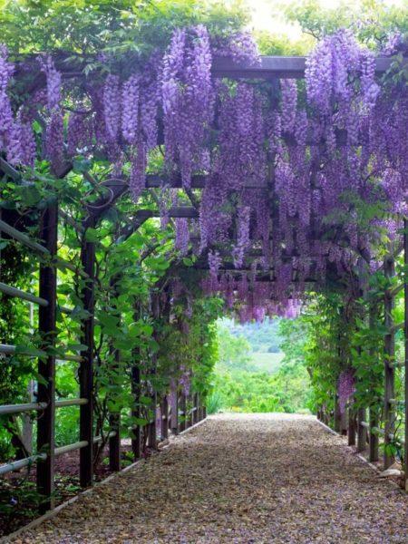 Перголы можно использовать как основу для цветов, винограда и других вьющихся растений