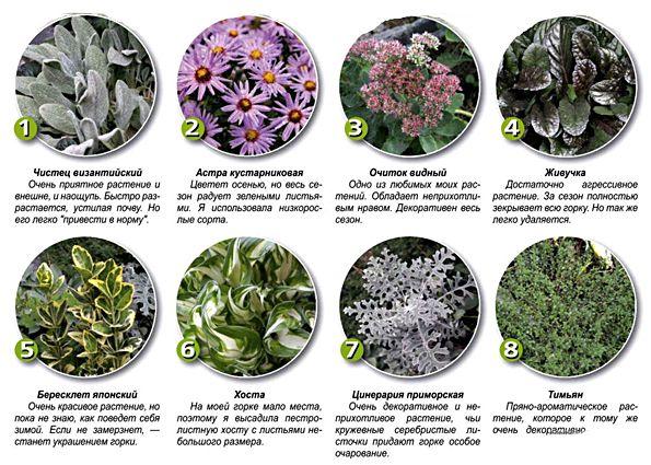 Примеры растений для разных участков альпинария