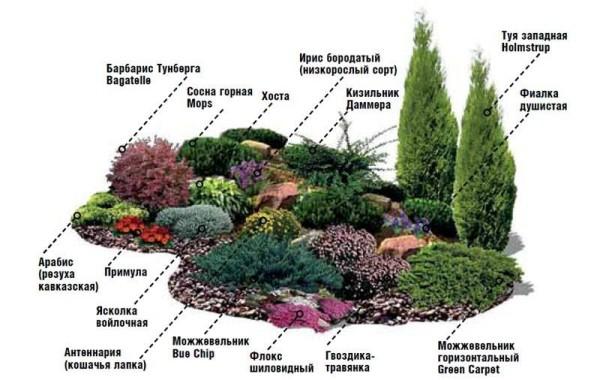 Расположение растений на горке