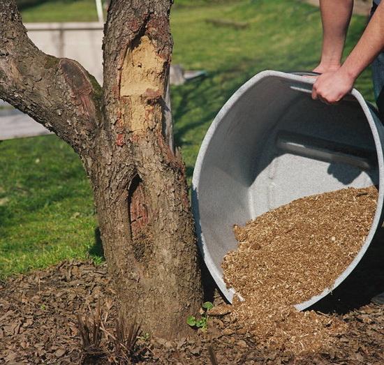 Утилизировать можно и напрямую, но все-таки компостирование весьма желательно