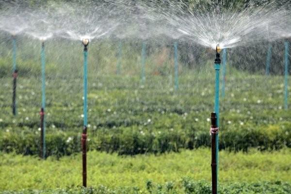 Автоматизированный полив огорода – мечта каждого владельца загородного участка