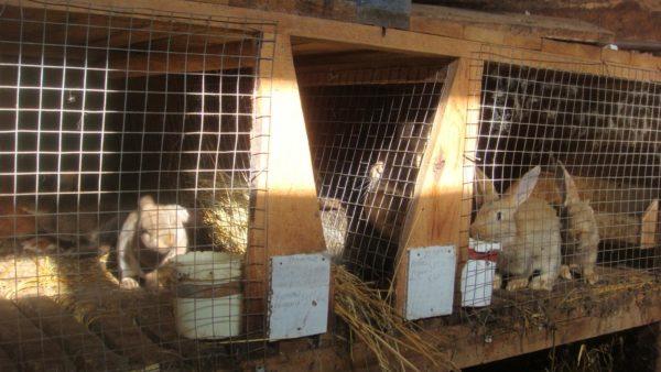 Чтобы разводить кроликов, сначала нужно сделать клетки.