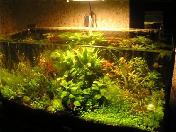 Днём в аквариуме свет не должен гореть, и совсем необязательно следить за этим именно вам