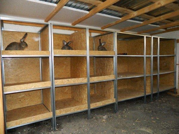 Если животные держатся в закрытом помещении, оно должно хорошо проветриваться.