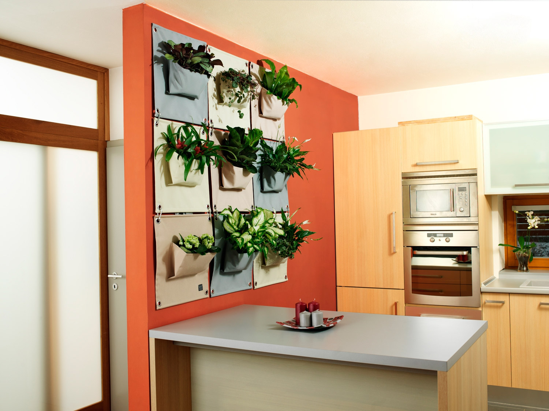 """Комнатные растения """"в мешочках"""" на кухне"""