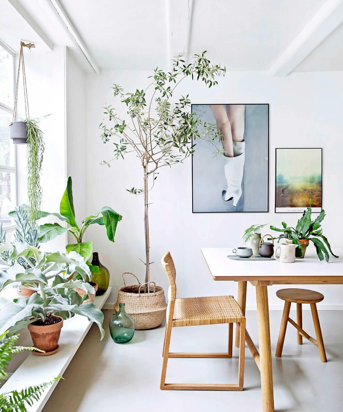 Растения в интерьере столовой