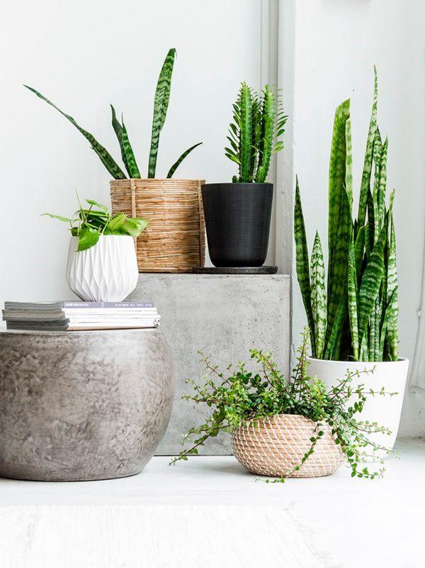 Растения - хорошая альтернатива отсутствию окон