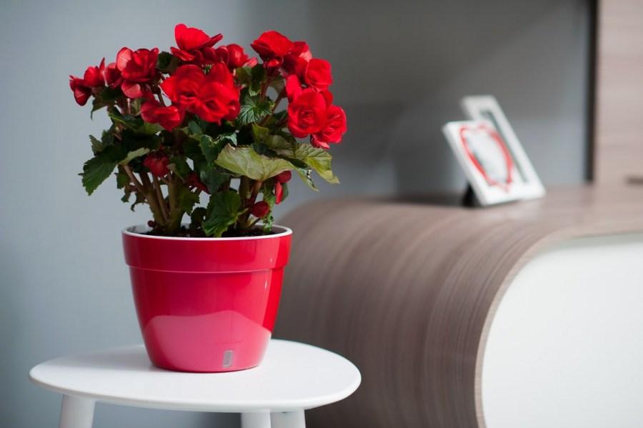 10 комнатных растений от осенней депрессии