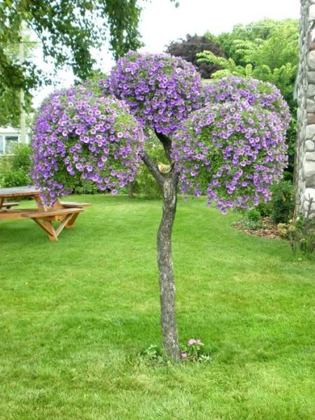 Горшки с петуниями на сухом дереве – отличное украшение любого участка