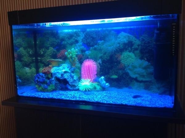 Изделия с хорошей защитой от влаги можно использовать в декоре аквариумов