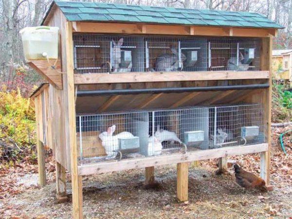 Кролей можно содержать во дворе участка.