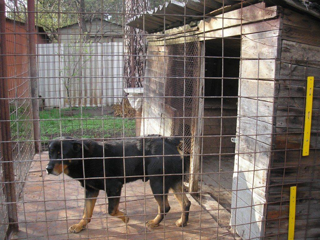 Собаки в вольерах картинки