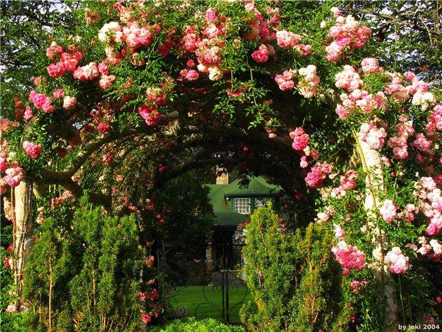 садовый дизайн в картинках