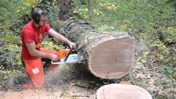 Штиль МС 660 достаточно мощный, чтобы легко проходить сквозь толстоствольные деревья твёрдых пород