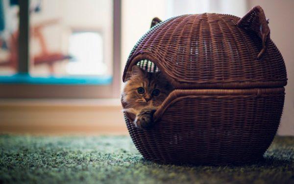Стильный круглый кошачий домик из газетных трубочек может стать настоящим украшением вашего интерьера
