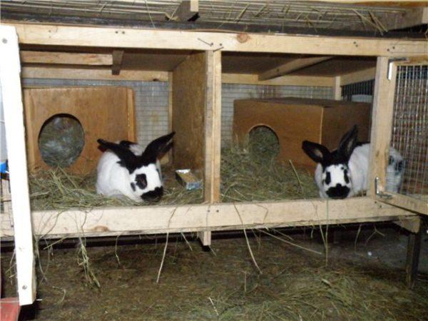 В гнездовом отделении зверьки спят, а в выгульном питаются.
