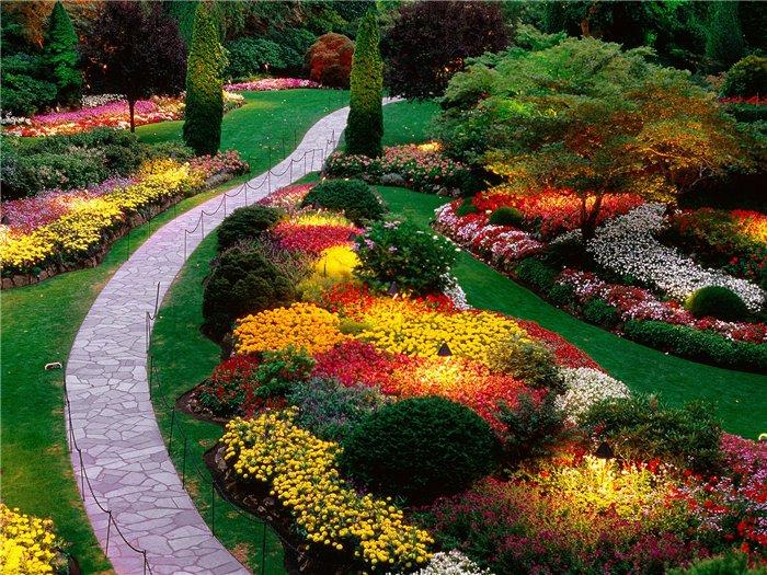 яркие комбинации цветов в саду